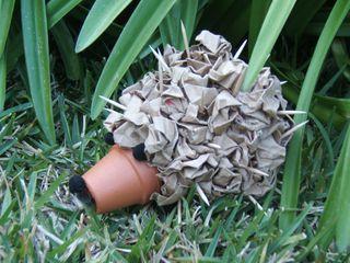Spike my hedghog stefanie girard