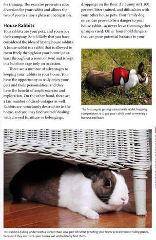 How to have house rabbits
