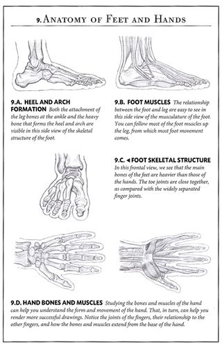 How to draw skeleton hands and feet