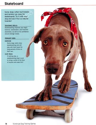 How to teach a dog to skateboard