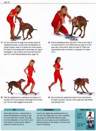 How to train a dog to skateboard
