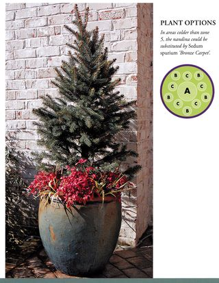 Christmas tree container garden with red