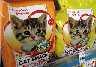 Cat_smack_cat_food_funny_photo