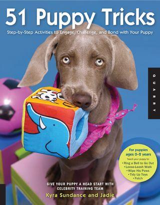 How-to-teach-puppy-tricks-kyra