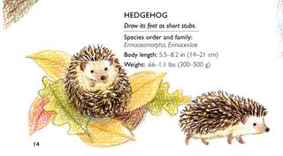 How-to-draw-hedgehog-colored-pencil