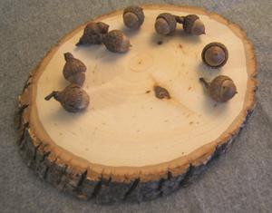 Wood_and_acorns
