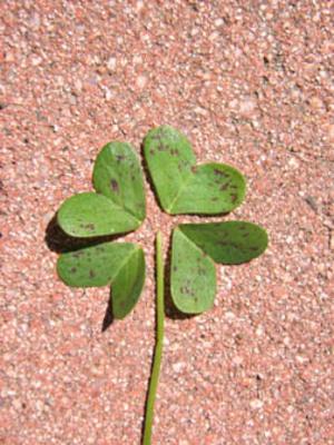 Fake_4_leaf_clover