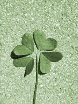 Green_fake_clover