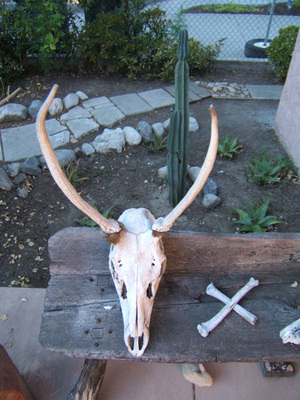 Skull_with_horns